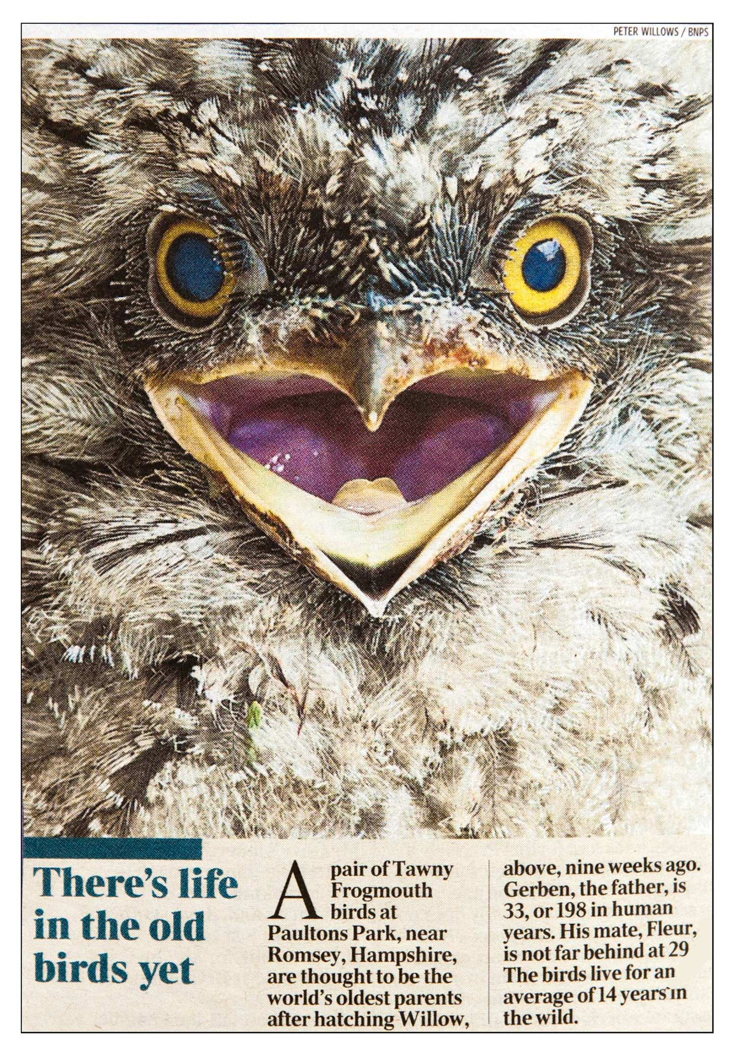 Peter Willows Photographer dorset weddings press & pr Dorset-sunday-times oldest-bird-times-01